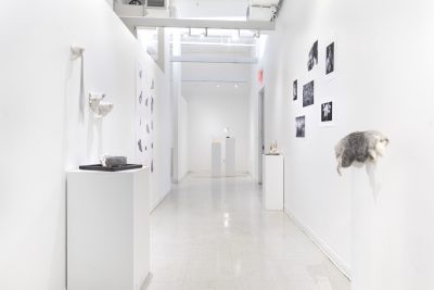 nstallation view of photographs and sculptures displayed down a long white hallway