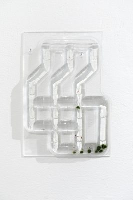 A vacuum sealed grid of tubes filled with water hangs on the wall. At the bottom of the water are a handful of marimo moss balls and small red shrimp.