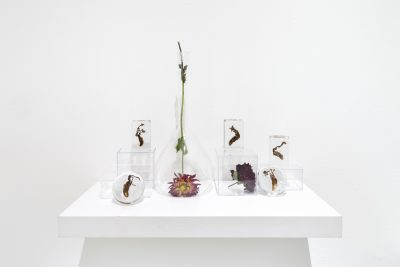 Dried flowers in a variety of transparent containers sit on a pedestal