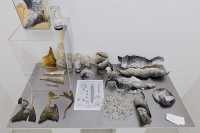 Samples of deconstructed fish skins, scales and tails sit on a table around a black and white diagram of a ship and magnifying glass.