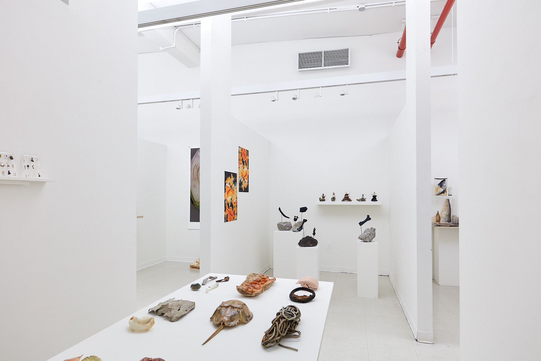 Installation view of studio cubicles, including many natural artifacts displayed on tables, shelves and pedestals
