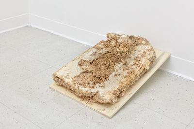 A sheet of slightly inclined wood holds a tombstone shaped pile of wood chips being digested by mycelium growth