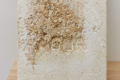 A detail of the mycelium growth reveals an impression of letters, spelling out the word AGUA