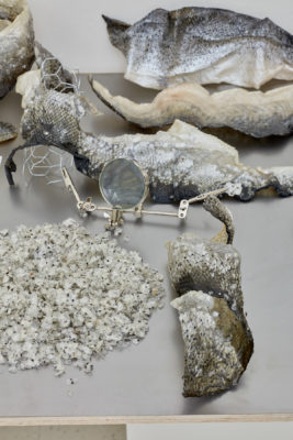 Samples of deconstructed fish skins, scales and tails sit on a table around a magnifying glass
