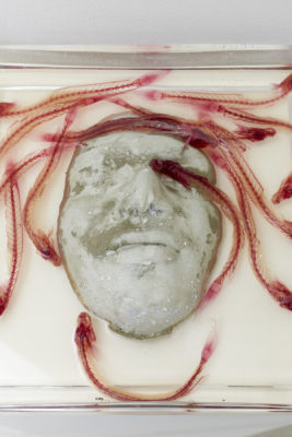 A face casted out of cement sits in a glass dish filled with liquid and fish specimens that have been stained and cleared