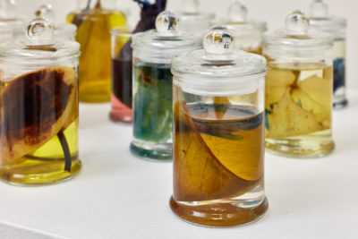 Small glass jars of botanical specimens submerged in a liquid preservative.