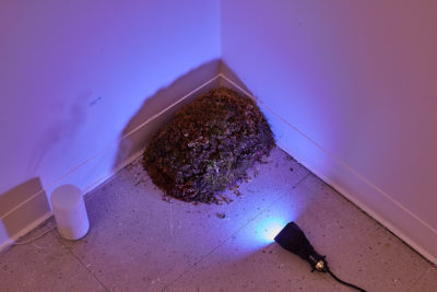 A lump of moss sits in the corner of a white room with a purple light casting shadows