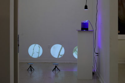 Installation view of images cropped in a circle, projected on a wall near the floor. Nearby a purple light illuminates a vase of water.