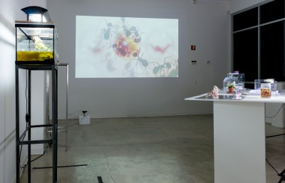 Blue Egg, Installation view
