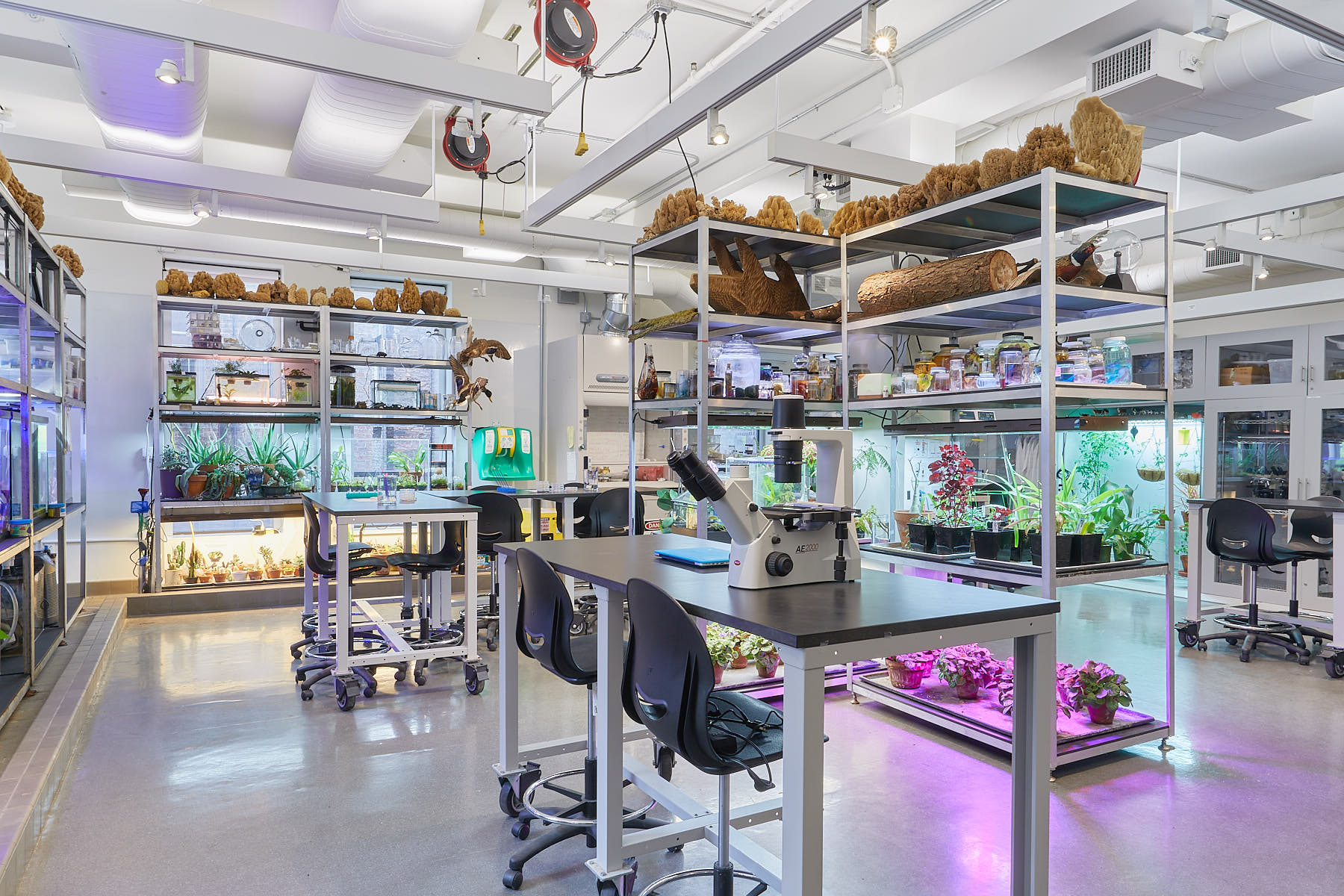 Empty laboratory space lined with tall shelves of aquariums, plants and specimens