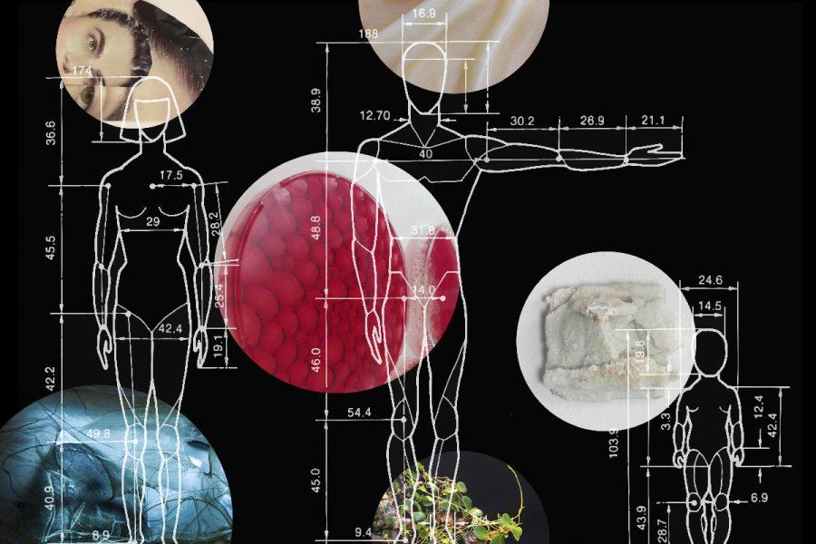 Scale: Studies in Bio Art
