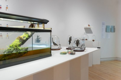Where is the Art in Bioart?, Installation view