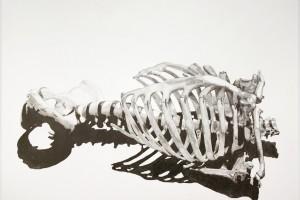 Anatomy I Course - BFA Fine Arts Department - SVA NYC