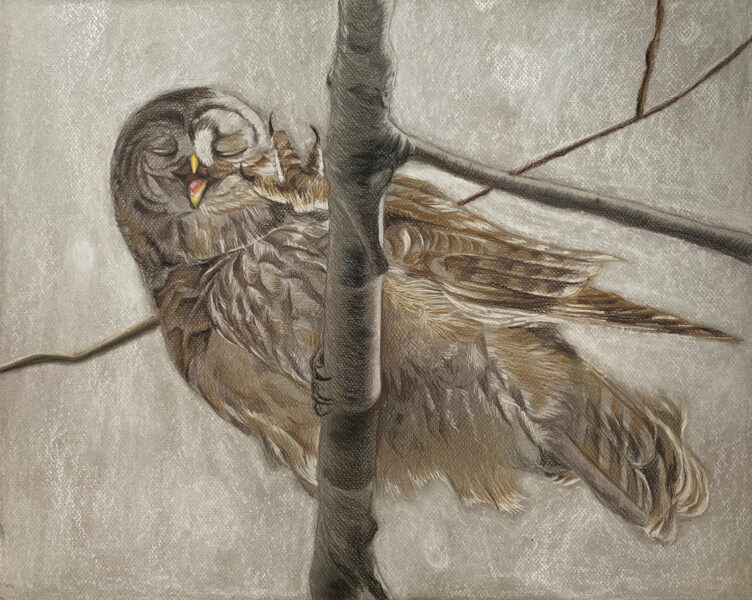 Wanru Jovie Li, Owl, 2020. Colored pencil and pastel. 48 x 36 inches.