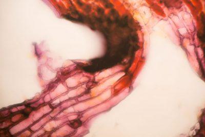 The Biophillia Hypothesis_40
