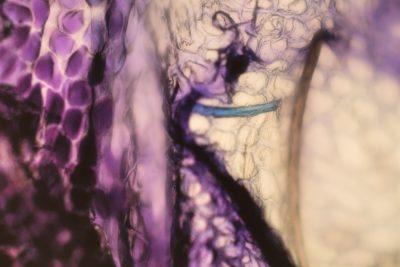 The Biophillia Hypothesis_46