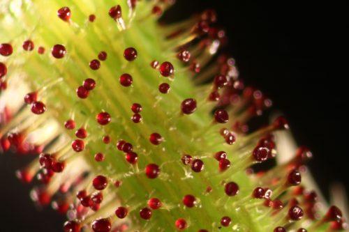 Botanica: Imaging the Green Planet