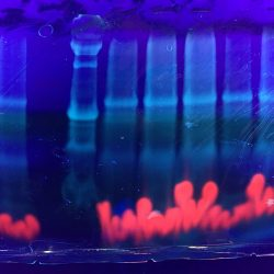 Bio Design Challenge - Myotomato